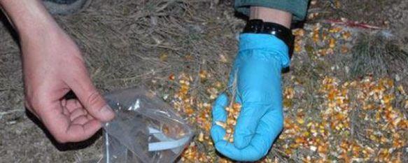 Detenido el presidente de una asociación de canaricultura por usar cebos envenenados, El presunto autor, que se encuentra en libertad con cargos, está acusado de un presunto delito contra la flora y la fauna, 19 Sep 2012 - 18:51