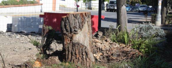 Flores justifica la tala de árboles en avenida de Málaga
