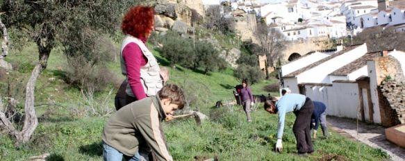 Una veintena de voluntarios participan en la reforestación en las Murallas del Carmen, En la actividad desarrollada en la mañana de ayer se plantaron más de cien arbustos autóctonos, 28 Jan 2013 - 19:33