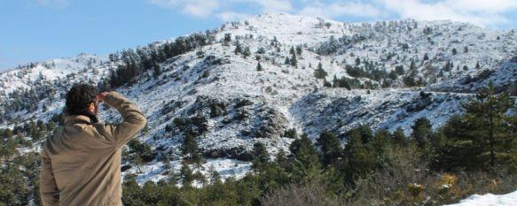 La Serranía de Ronda registra la tercera nevada del año, AEMET activa de nuevo la alerta amarilla para la jornada del viernes por fuertes rachas de viento, 20 Feb 2013 - 16:09