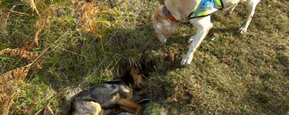 Imputan a cuatro personas por delitos contra la flora y la fauna en la Serranía de Ronda, El SEPRONA, agentes de Medio Ambiente y veterinarios de la  Oficina Comarcal Agraria trabajan de forma conjunta  para combatir el uso de cebos envenenados, 07 May 2013 - 18:04