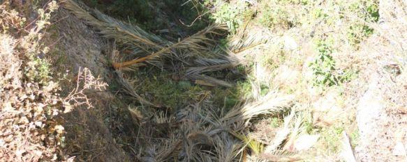 Cuando limpiar se convierte en sinónimo de esconder la suciedad , Arrojan los restos de poda de las palmeras de los Jardines de Cuenca a las cornisas del Tajo, 12 Jun 2013 - 16:34