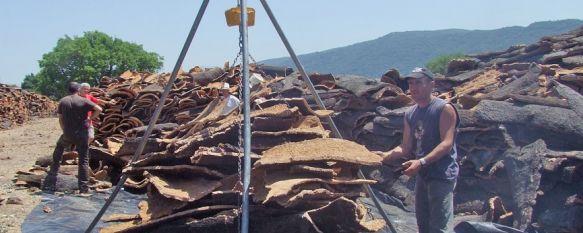 El Ayuntamiento espera ingresar más de 560.000 euros por la venta del corcho , La cifra que se podría percibir es ligeramente superior a la registrada en la campaña del pasado año, 22 Jul 2013 - 16:44