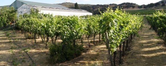 Ronda consigue la certificación de las Rutas del Vino de España                  , Las bodegas de la Serranía entran a formar parte de las 21 rutas de este exclusivo producto turístico, 12 Nov 2013 - 19:18