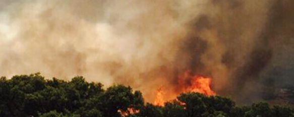 Declarado un incendio en la zona militar de Navetas, La UME está actuando para extinguir el fuego, mientras que efectivos del Infoca y del Parque de Bomberos de Ronda permanecen en la periferia, 02 Jul 2015 - 16:51