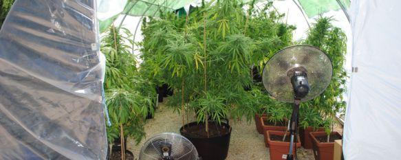 La Policía Nacional incauta 135 plantas de marihuana en el Llano de la Cruz, Un norteamericano de 37 años ha resultado detenido como único responsable de la plantación , 17 Aug 2016 - 20:01