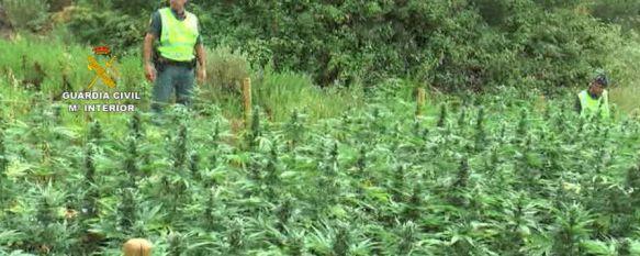 La Guardia Civil interviene en el Genal más de 9.300 plantas de marihuana y 122 kilos de cogollos, La operación se ha saldado con la detención de siete personas, acusadas de delitos de tráfico de drogas y pertenencia a organización criminal, 10 Nov 2016 - 12:58
