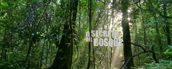 """""""El secreto del bosque"""", mejor obra audiovisual de la Bienal Internacional de Cine Científico , El documental, realizado por  el director Antonio Grunfeld, ha sido el primero grabado de manera completa en Guinea Ecuatorial, 02 Dec 2016 - 18:48"""