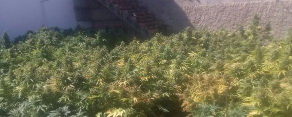 Desmantelan una plantación de marihuana en una finca y se incautan 1.275 plantas , La Policía Nacional encontró varios animales en estado de abandono y de desnutrición, 20 Jul 2017 - 13:44