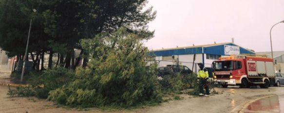 El temporal de lluvia y viento provoca incidencias leves y el cierre de los principales parques , Caídas de árboles, de señales de tráfico o vallas, han sido algunos de los problemas registrados, 11 Dec 2017 - 17:08