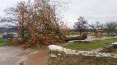 Uno de los árboles que se ha desprendido a consecuencia del temporal. // CharryTV