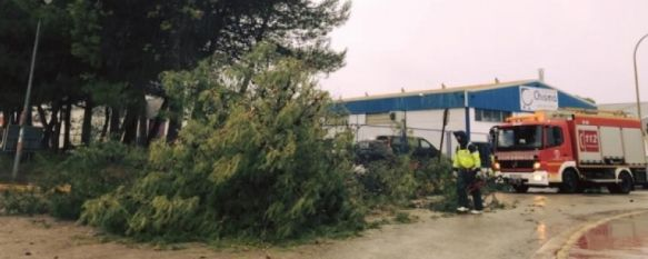 La AEMET activará mañana la alerta amarilla por rachas de viento de hasta 80 km por hora, El Jefe de la Policía Local explica que de existir riesgo de caída de ramas se decretará el cierre de parques públicos de seis de la mañana a la medianoche, 13 Nov 2019 - 19:20