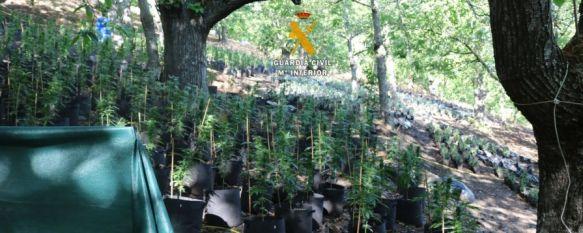 La Guardia Civil desmantela una organización criminal por cultivo de marihuana en Faraján, La operación se ha saldado con cuatro detenciones, y un investigado por delitos contra la salud pública, y se han incautado 6.043 plantas de hachís y polvo de cannabis, 16 Dec 2019 - 17:56