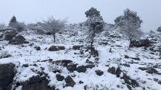 Otra de las estampas que ha dejado la nieve en Sierra de las Nieves. // José Carlos Orozco