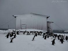 El joven arriateño ha guiado durante varias temporadas a los turistas por las colonias del pingüino emperador. // Juan José Miramón