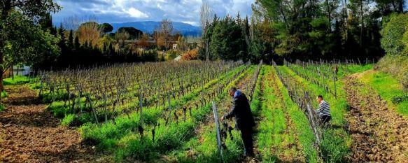 El Moscatel de Alejandría de BadMan Wines logra una Medalla de Oro en un concurso mundial, Unos 70 vinos de todo el mundo, en su mayoría españoles y…, 21 Feb 2020 - 19:19