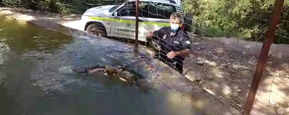 La Policía Local rescata a un águila calzada que quedó atrapada en una alberca, La actuación, que se desarrolló el pasado viernes, contó con la intervención de la delegación de Medio Ambiente y de la Unidad de la Patrulla Verde , 21 Sep 2020 - 13:27