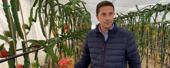 La pitaya comienza a dar sus frutos en La Indiana, El economista rondeño Pedro Dúctor posee 1.500 plantas de…, 21 Oct 2020 - 18:51