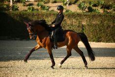 Los jinetes de Doma Clásica deben ejecutar una serie de movimientos en base a la armonía que establezcan con su caballo. // María Carnerero