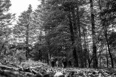 Su amplio pinsapar es uno de los principales atractivos del parque natural. // Actividades en Sierra de las Nieves