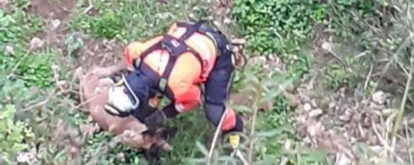 Los Bomberos rescatan a un perro que había caído a las cornisas del Tajo, El animal, que se encuentra en buen estado, se había precipitado 20 metros, aunque por fortuna un zarzal amortiguó la caída, 02 Mar 2021 - 11:34