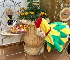 Coincidiendo con el Domingo de Pascua, Mishka y otra de las mascotas de la familia, la coneja Vasilisa, han sido ataviados para la ocasión. // Natalia Maksimava