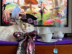 El gato ha encarnado a conocidos personajes Disney como al Sombrerero Loco de Alicia en el País de las Maravillas. // Natalia Maksimava