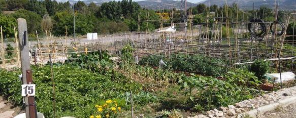Todas las huertas están plantadas y en unas semanas comenzará la recogida de los frutos con variedades de la zona.  // CharryTV