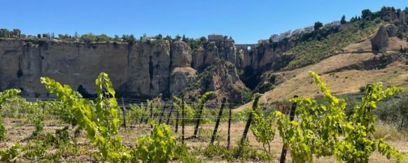 Los viñedos de Samsara Wines acogieron el verano de 2018 los conciertos de Ronda suena en la viña. // Manolo Guerrero