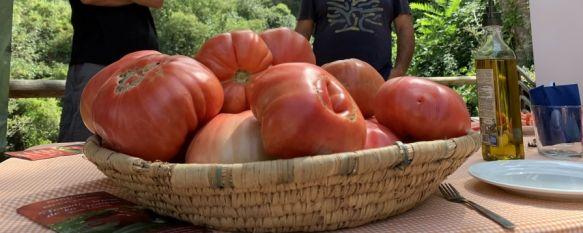 De la huerta a la mesa: La recuperación del tomate rosa de La Indiana, Seis productores agrícolas de la Serranía se involucran en un proyecto piloto para fomentar el consumo de un producto que destaca por sus cualidades culinarias, 10 Aug 2021 - 17:26
