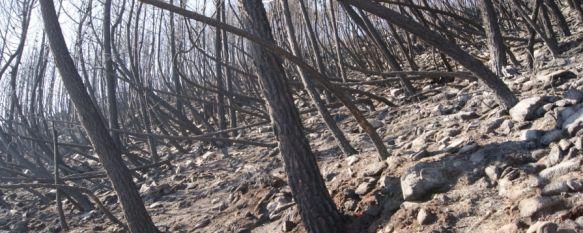 La Junta cree que el incendio de Pujerra no ha sido provocado, Este mediodía se ha desactivado el nivel 2 de emergencia en el incendio forestal, 06 Feb 2012 - 18:04