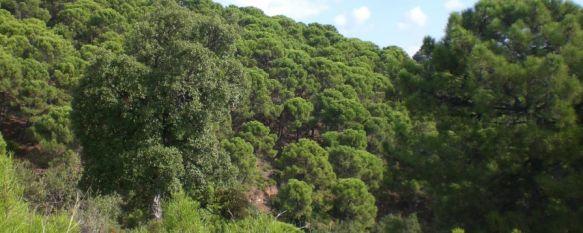 Cinco jóvenes resultan heridos tras caer por un desnivel con un todoterreno en Altabacales, El accidente tuvo lugar el sábado en una pista forestal de la Sierra de las Nieves, 12 Feb 2012 - 01:26