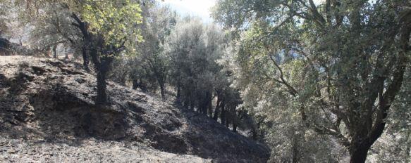La Junta, molesta con Diputación por obviar su competencia en materia forestal, El gobierno autonómico planteará un convenio al ente supramunicipal para la reforestación en el Valle del Genal, 14 Feb 2012 - 15:37