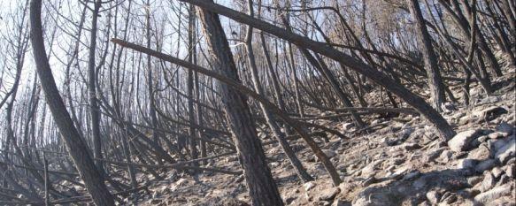 Detienen a los miembros de un retén del Infoca como presuntos autores del incendio de Pujerra, Se les acusa de cometer una negligencia mientras realizaban tratamientos selvícolas en la zona afectada por las llamas, 27 Feb 2012 - 23:16