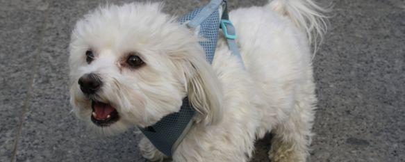 Tramitan las primeras sanciones por incumplimiento en las normas de tenencia de animales, Uno ha sido por pasear a un perro peligroso sin amarrar y sin bozal y otro por no recoger los excrementos, 27 Mar 2012 - 19:42