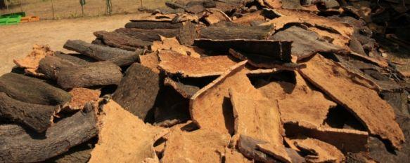La venta del corcho de los Montes de Propio generarán más de medio millón de ingresos, Se han recogido unos 6.000 quintales que se venderán a la única empresa que se ha presentado a licitación, 27 Aug 2012 - 19:46